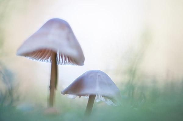 paddenstoelen-duo