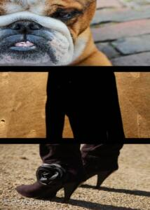 drie-een judith-hond3kopiekopie